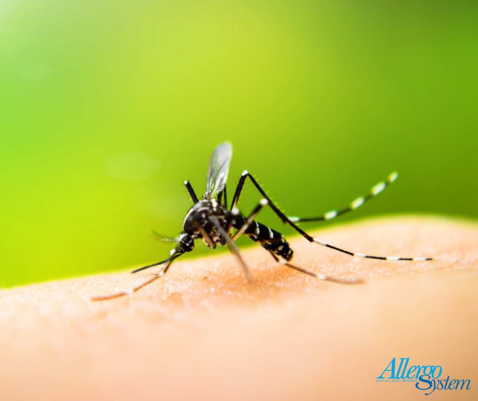 zanzare dermatite atopica